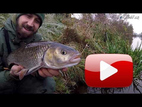 Aktivní lov tloušťů v chladné vodě - listopad 2018